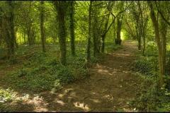 woods1s