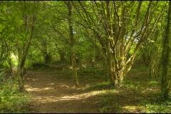 woods2s